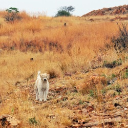 Melville Koppies in the midst of winter